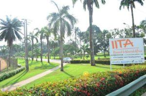 International Institute of Tropical Agriculture (IITA) Job Recruitment